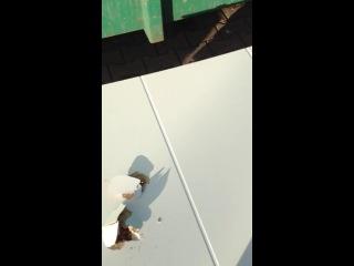 Фотошоп йоци гуш ма ду шун дуй?