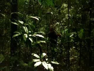 Резня в Долине динозавров (Голые и дикие) / Nudo e selvaggio (1985)