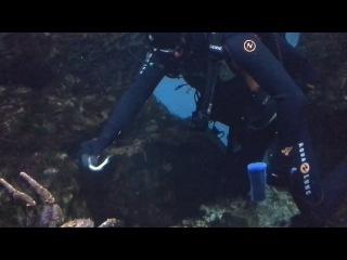 Кормление краба в океанариуме.
