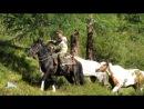 лошади с перевала 3000м Карк Тюрек самый высокий конный...