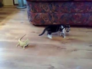 Котёнок и 2 игуаны