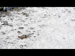 Весна пришла снежок растаял. Весна покажет кто где