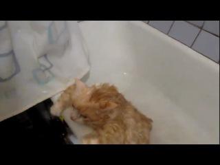 Тима Давай! Кот прыгает в ванной.