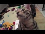 Ну очень смешной котик