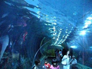Подводный тоннель в океанариуме Бангкока