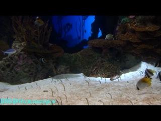 «Джорджия аквариум (Georgia Aquarium)» - самый большой аквариум в мире (2)