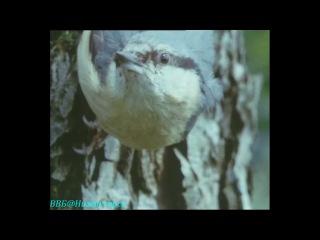 BBC «Живая планета. Портрет Земли (03) - Северные леса» (Документальный, 1984)