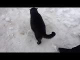 Атака котов и кот-мутант. Корпоратив 2gis.