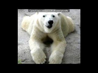 «Удивительные медведи» под музыку Генри Манчини (Henry Mancini) -