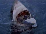 Самая большая акула в мире - Мегалодон!
