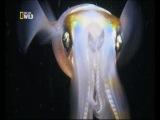 Природа и животные: самое странное место в океане