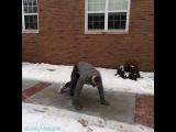 лёд на улице делает всех брейкдансерами (6 сек)