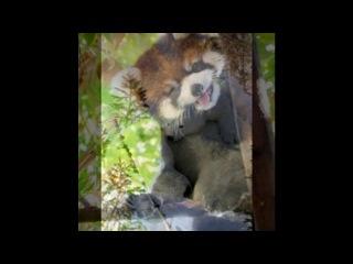 «С моей стены» под музыку ♥Клуб RAЙ♥ - Хорошие девушки попадают в Рай, Плохие на Казантип (NEW MIX 2011). Picrolla