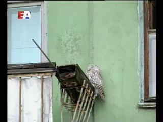 Из леса - на балкон. К жителям дома по улице Ватутина в гости заглянула сова.
