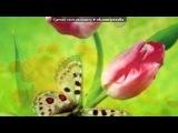 С моей стены под музыку Анастасия - Вальс из мультфильма (на русском). Picrolla