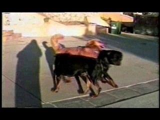 Голая памелла андерсон (pamela anderson) - 1999 pamela anderson & tommy lee - sex tape full