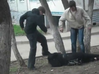 Two young thugs knock a old man out then repeatedly stomp and kick him in the head