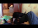 Кирилла трахает собака Довгаля!