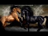 конкур под музыку В. А. Моцарт (современная обработка) - Lacrimosa (Requiem К.626 ре-минор). Picrolla