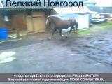 г.Великий Новгород(Каролина 2года    Слава 2года