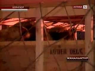 «ҚазАгроФинанс» шмалленберг вирусына шалдыққан сиырлар үшін австриялықтарды сотқа бермек