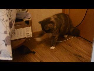 Кошка и шарик 2