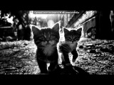 «Со стены Для бездомных животных!люди нельзя так!» под музыку Кристина Прилепина - Котёнок в колодце. Picrolla