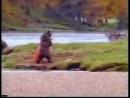 Битва Медведя и Человека за лосось. старая реклама