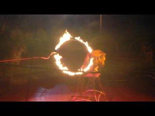 Пермский цирк, тигры Суматры