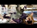 Прикольние картинки про животных со статусами 2013