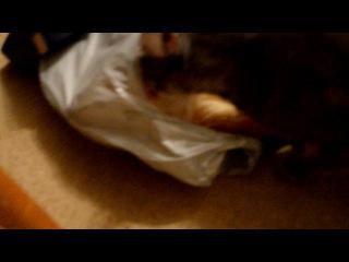 Что не хватает в организме кошки еслиона лижет БАТОН ?!