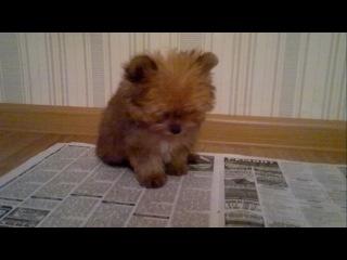 моя собака как - хатико,а ещё ссатико,сратико,жратико,спатико,оратико,ночью спать не доватико!)