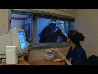 Животные похожи на нас / Animals Like Us - Часть 4. Язык общения