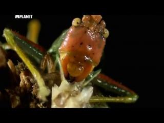 Войны жуков-гигантов 2. 3 серия / Monster bug wars 2 (2012)