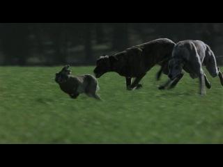 Отрывок из фильма Большой куш Зайцу пиздец Заметано Лондон ►filmCUT