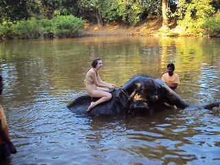 я купаюсь на слоне