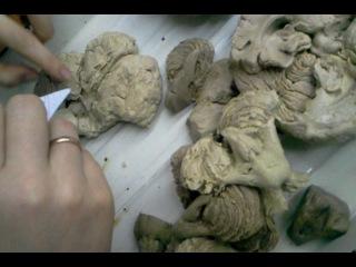 средний и промежуточный мозг