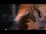 Таинственная Россия: Загадочные черепа или опыты над человечеством? 20/01/2013
