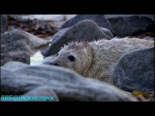 BBC Рассказы о животных 02 серия Документальный 2008