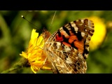 «Цветник» под музыку Шансон - песня про маму. Picrolla