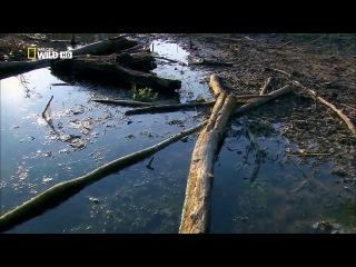 1 серия / Дунай: Европейская Амазонка (2012)