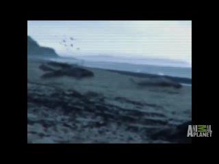Русалки Найдено тело