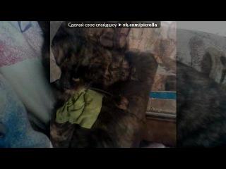 «моя леся и я» под музыку группа БиС - Катя возми телефон... . Picrolla
