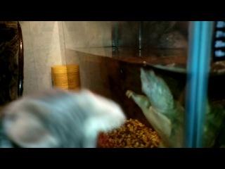 общение кота и черепахи