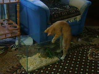 Моя Люся ворует еду у черепахи...