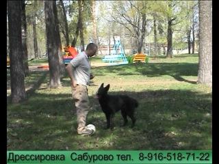 Собака учится играть в футбол