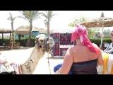 «Арабские скакуны» под музыку Dj Valer -  Аргентинское танго - Кумпарсита. Picrolla