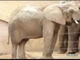 Копро слон
