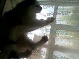 мой кот-дурак))
