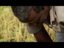 В дебрях Индии 2 серия Ганг река жизни